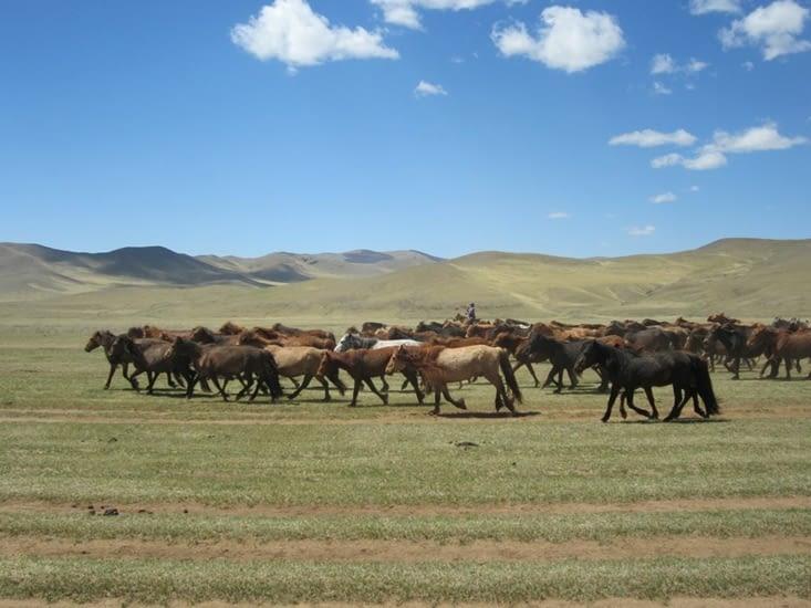 La migration du troupeau est très sportive
