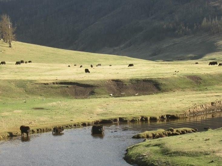 La vallée de l'Orkhon et ses rivières que nous prenons le temps de contempler, pour l'instant !