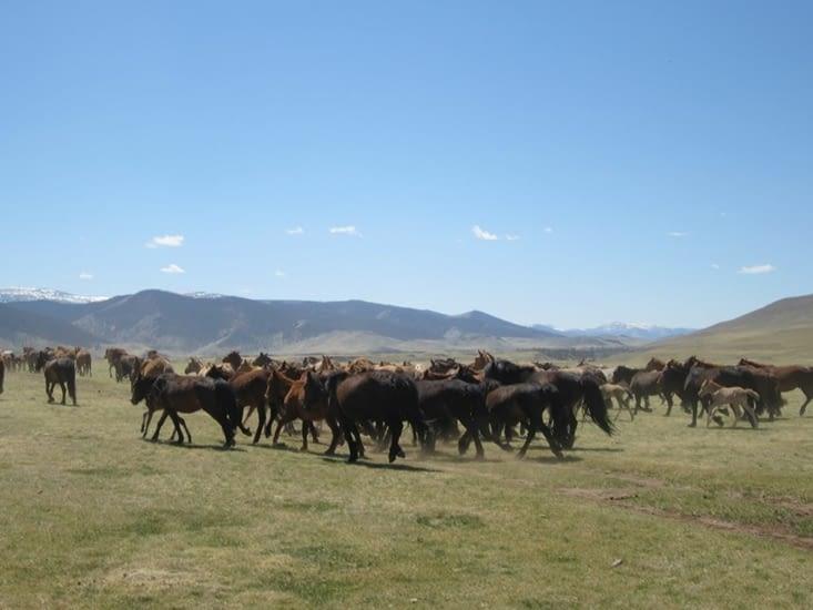 Nous entamons notre retour avec plus d'une centaine de bêtes
