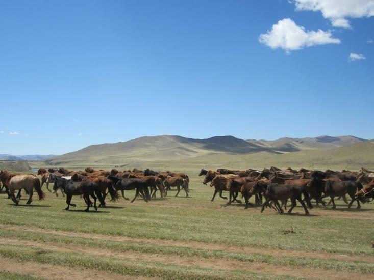 Un troupeau au galop est très impressionnant