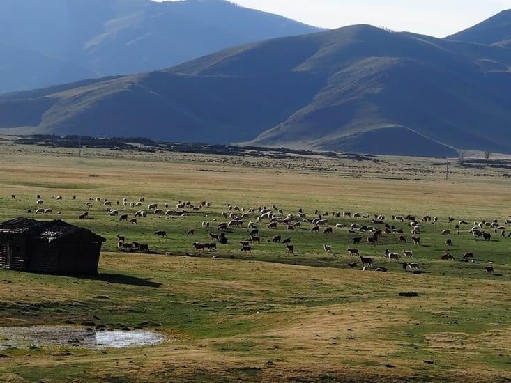 Un troupeau rencontré lors de notre escapade