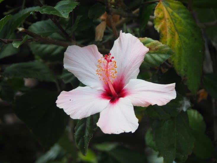 Les jolies fleurs de la place de Sucre