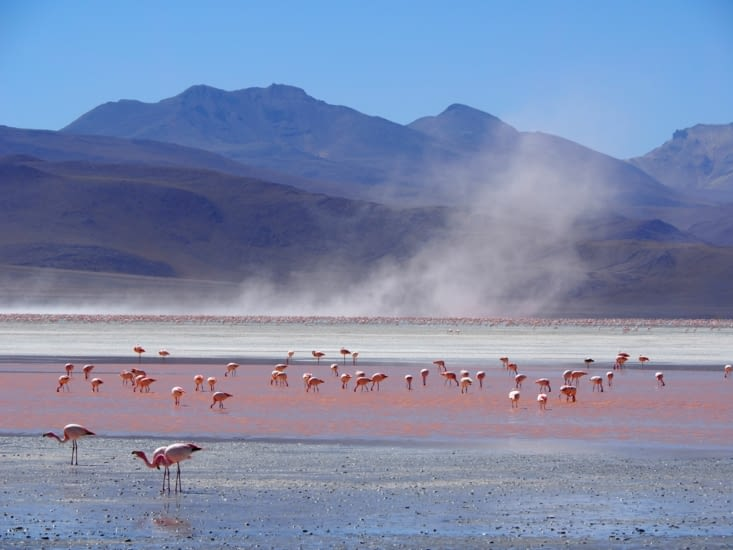 Vent violent sur la laguna colorada