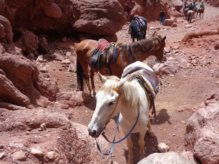 Nos montures pour notre balade à cheval autour de Tupiza