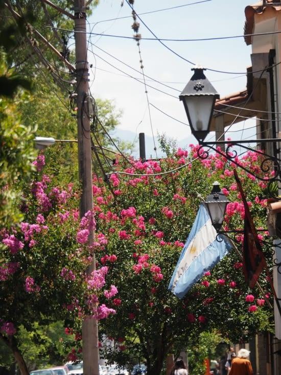 Les rues arborées de Salta