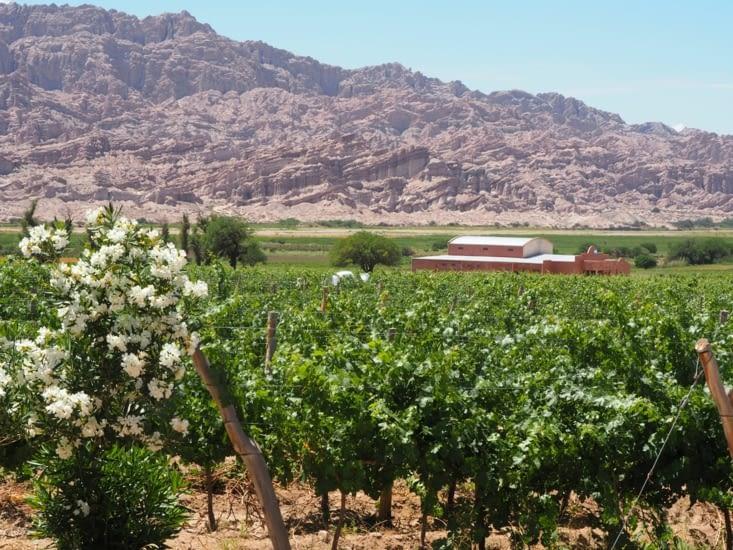 Les vignes et bodegas de la région de Cafayate