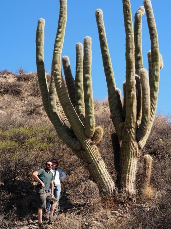Un cactus centenaire