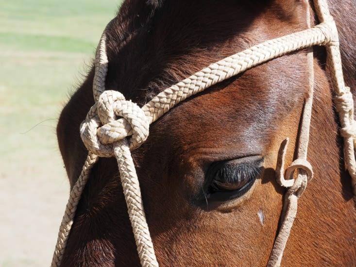 Un cheval de gaucho de la région de Salta