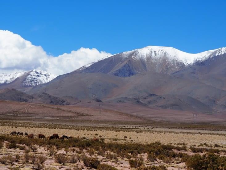Des paysages typiques de l'altiplano
