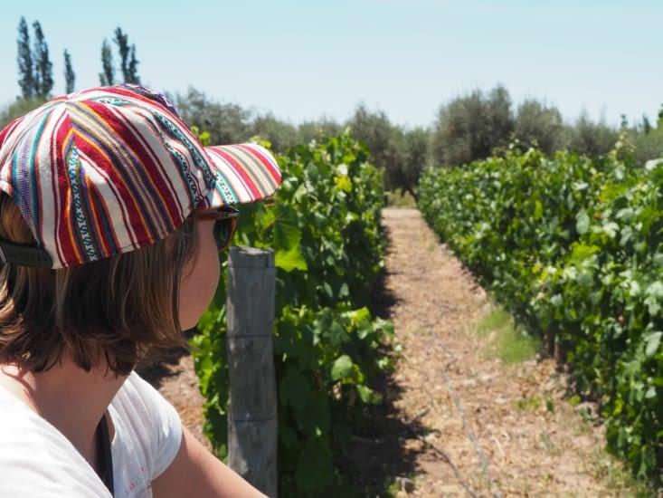 Route des vins de Mendoza à vélo
