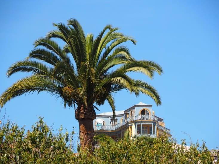 Les palmiers au pied des constructions de bois de Valparaiso