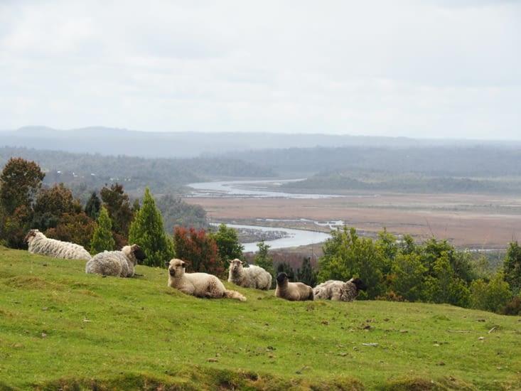 Grands champs de l'île de Chiloé