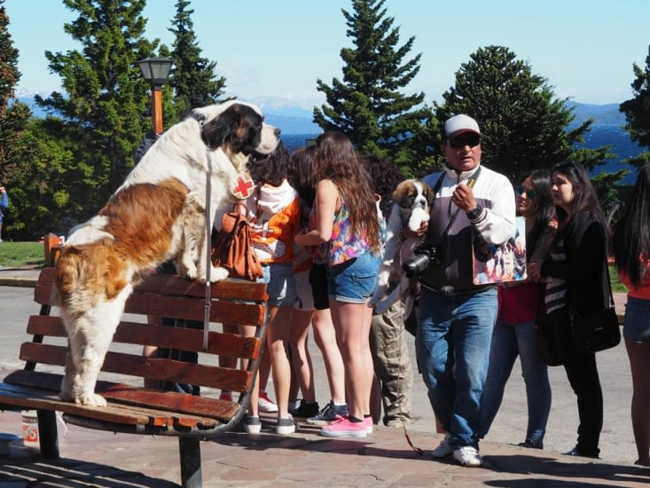 Les traditionnelles photos avec un Saint Bernard