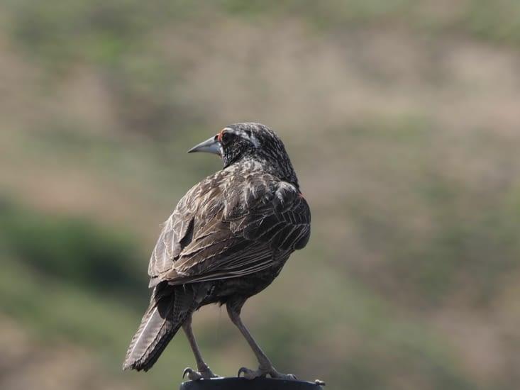 Un oiseau croisé en chemin