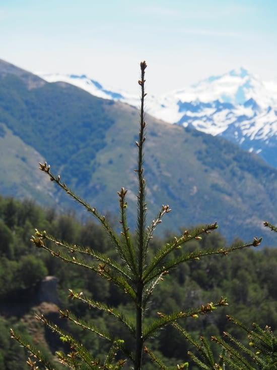 Un sapin en haut du Cerro Otto