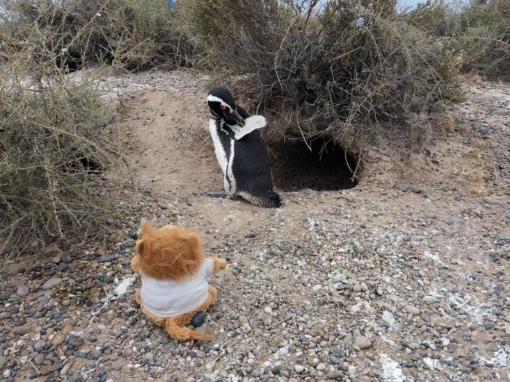 Aldebert fait une rencontre avec un manchot