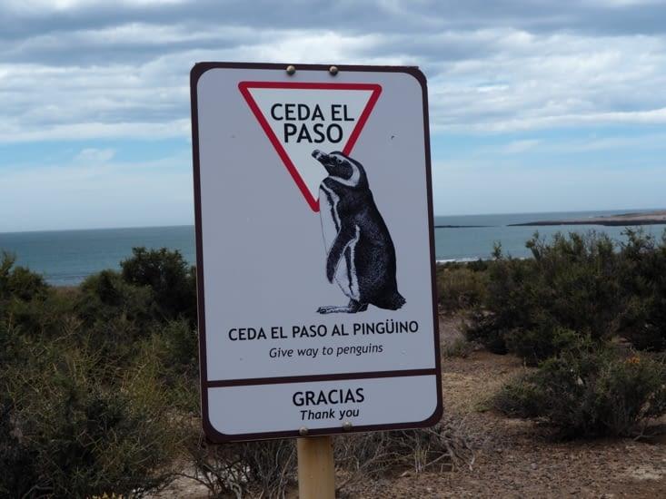 Dans la pinguinera, priorité aux manchots !