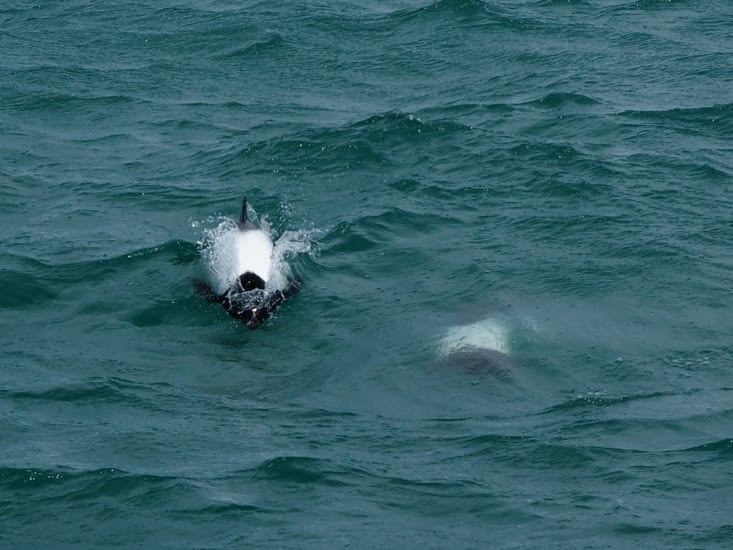 Les dauphins viennent nous rendre visite