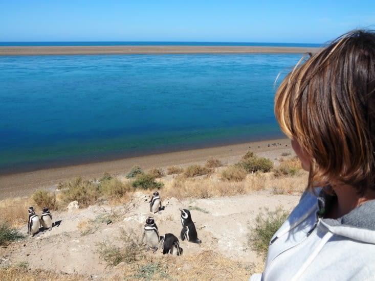 Yoyo devant des manchots de Puerto Madryn
