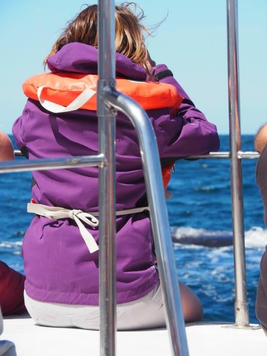 Yoyo en pleine observation de baleine