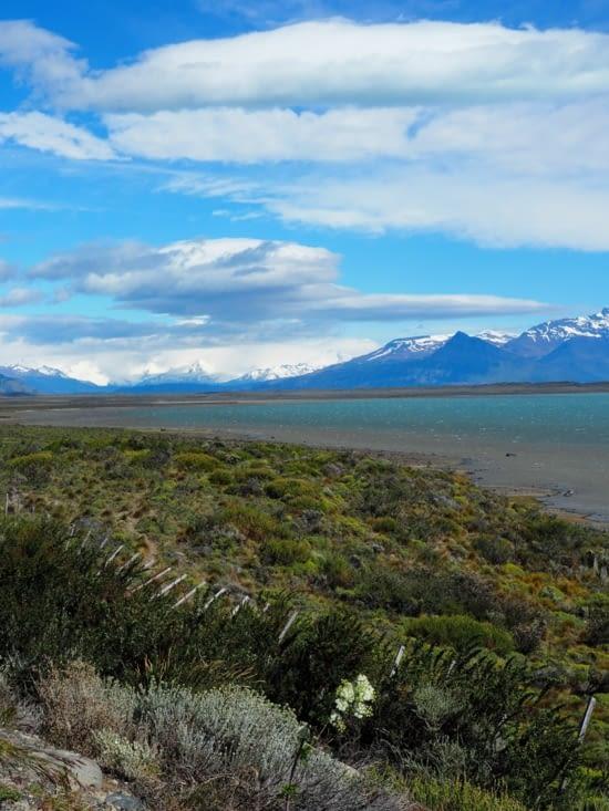 Les bords du Lago Argentino