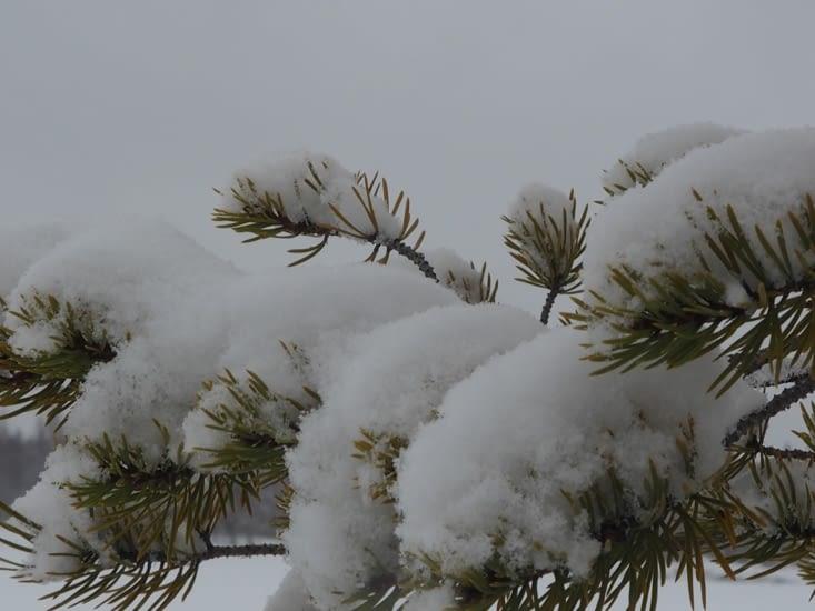 Les branches sous la neige