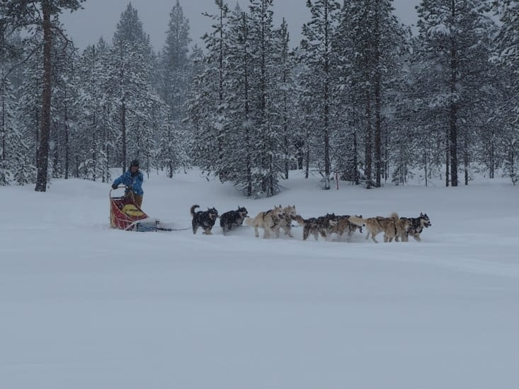 Un autre groupe part pour 2 jours de chiens de traineaux