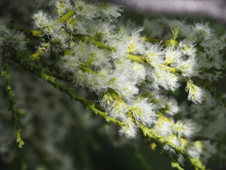La flore du Parc National Torres del Paine