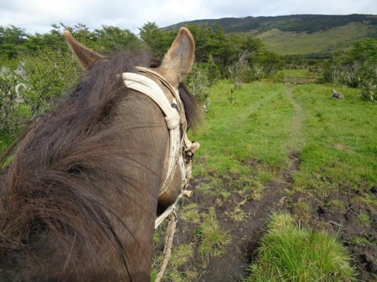 Le petit cheval chilien de Yoyo