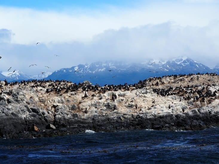 De nombreux oiseaux peuplent les îles du canal de Beagle
