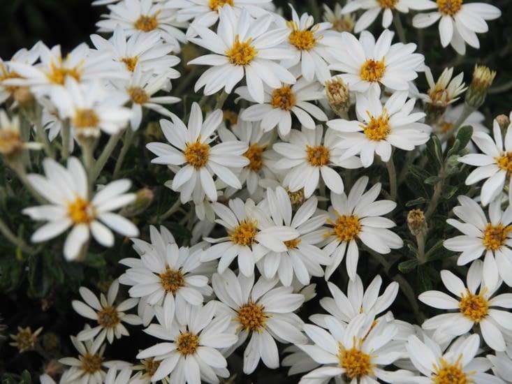 La flore du canal de Beagle