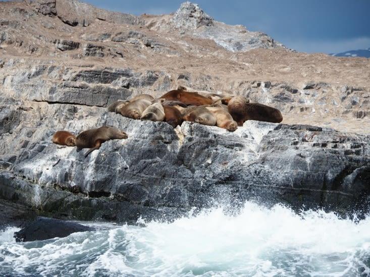 Les lions de mer se reposent sur les rochers