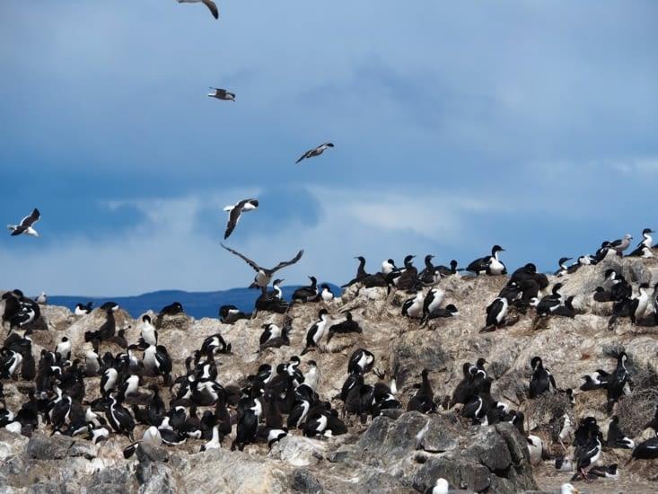 Les oiseaux du canal de Beagle
