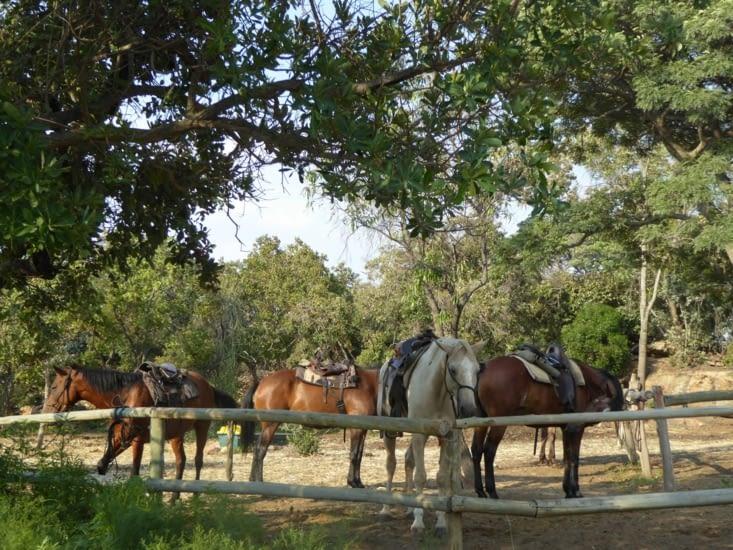 Les chevaux nous attendent
