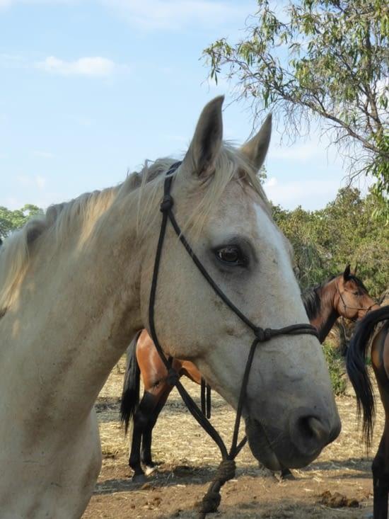 Le cheval de notre guide
