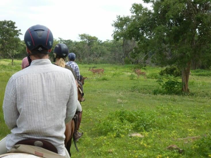 Rencontre avec des impalas