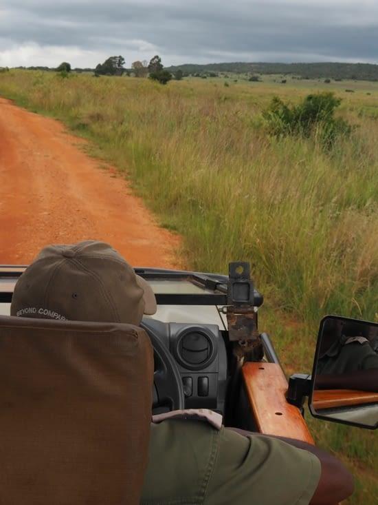 Safari à la recherche des big five