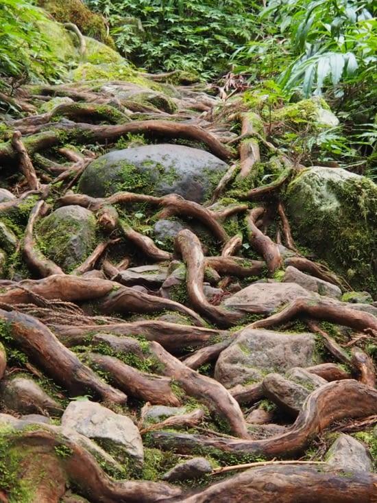 Chemin de racines proche de Hell-Bourg