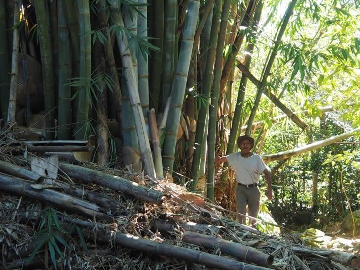 Tonton devant ses bambous