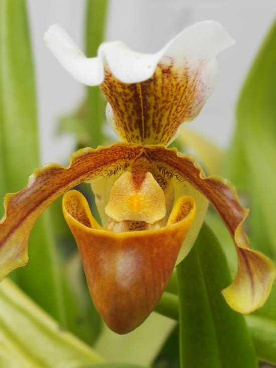 Une autre orchidée