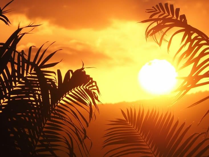 Couché de soleil sur les palmiers