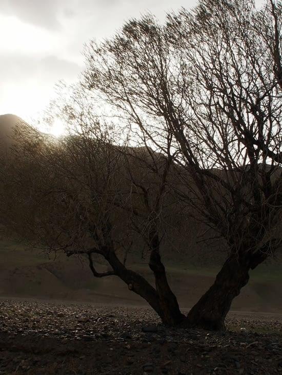 Un des rares arbres que nous croisons