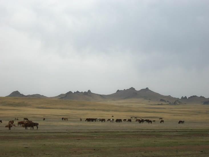 Un troupeau errant sur les bords de route