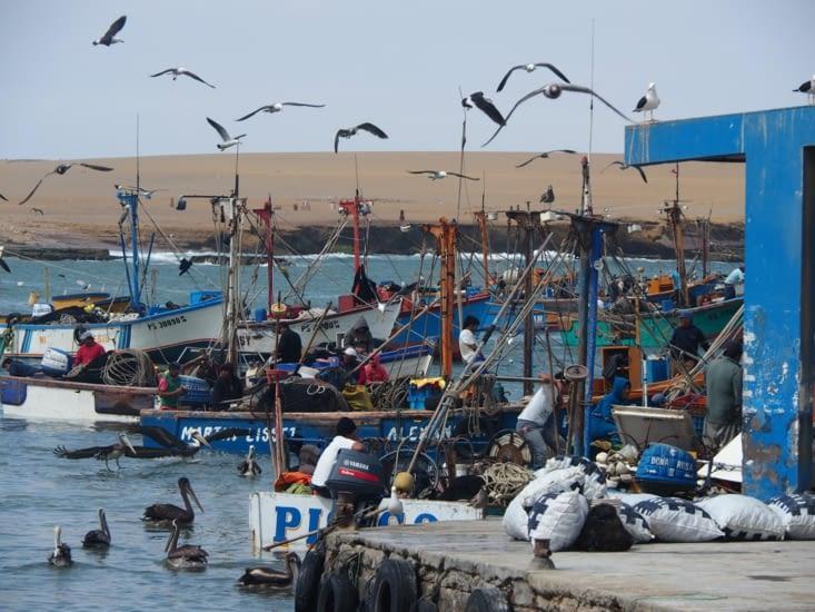 Le port au coeur de la réserve naturelle de Paracas