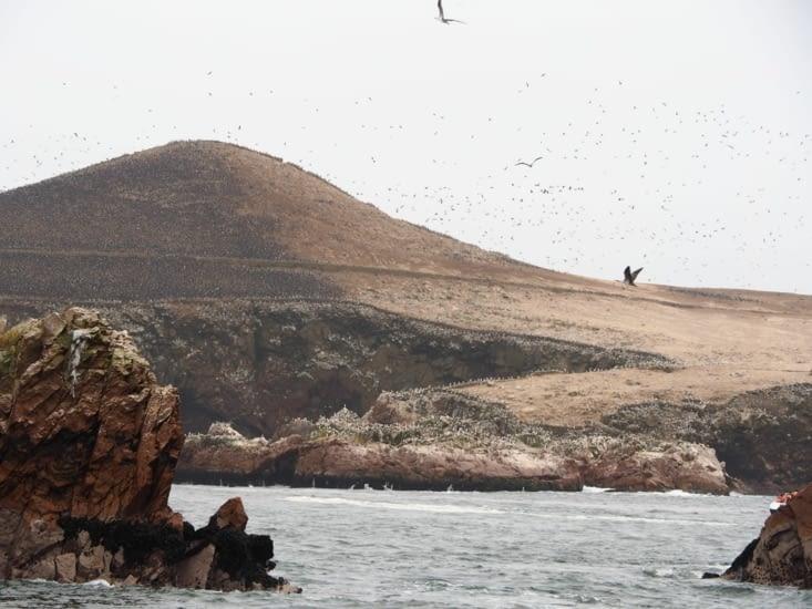 toute un flan de colline des iles Ballestas assombrie par des millions d'oiseaux