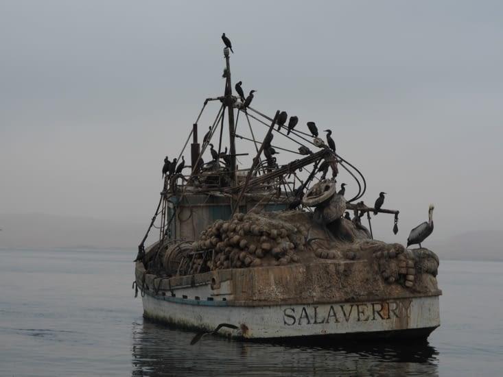Un bateau de pécheur, repère de cormoran et autres oiseaux
