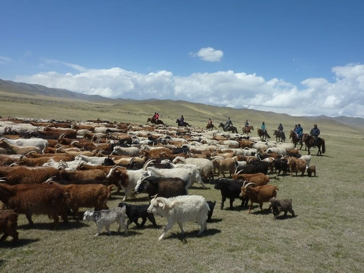 Après la traversée, nous voilà en groupe, nous sommes de véritables bergers !