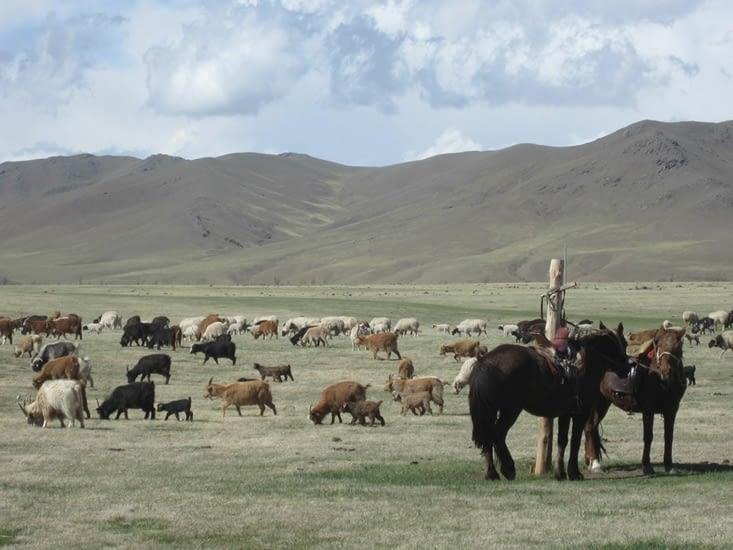 Enfin arrivé au camp d'été, chevaux et bétail méritent un moment de repos.