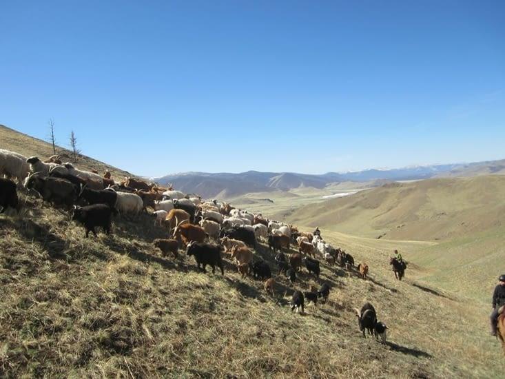 Nous avons récupéré le troupeau, l'ascension continue jusqu'à passer un col.