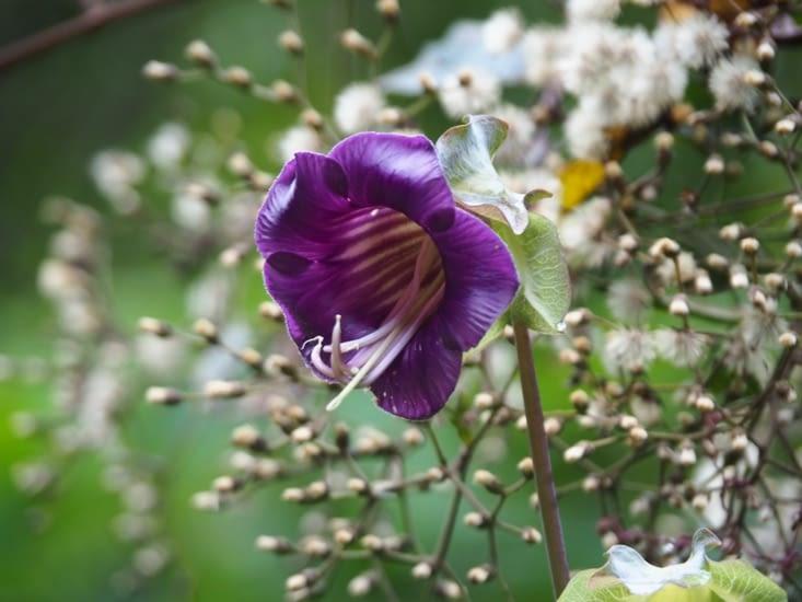 La flore rencontrée sur notre chemin